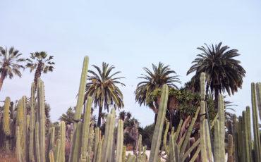 BARCELONA CITY GUIDE: EXPLORE LIKE A LOCAL